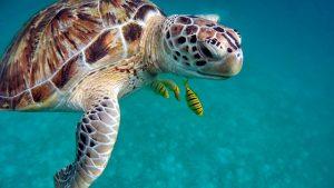 wakacje podwodne